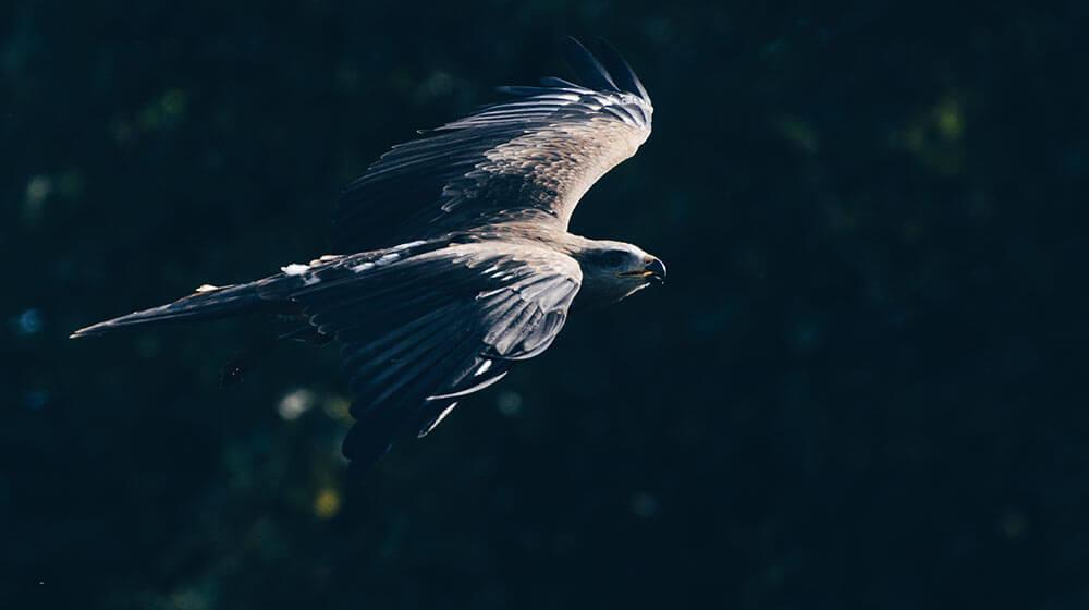 home_wildlife_photos4