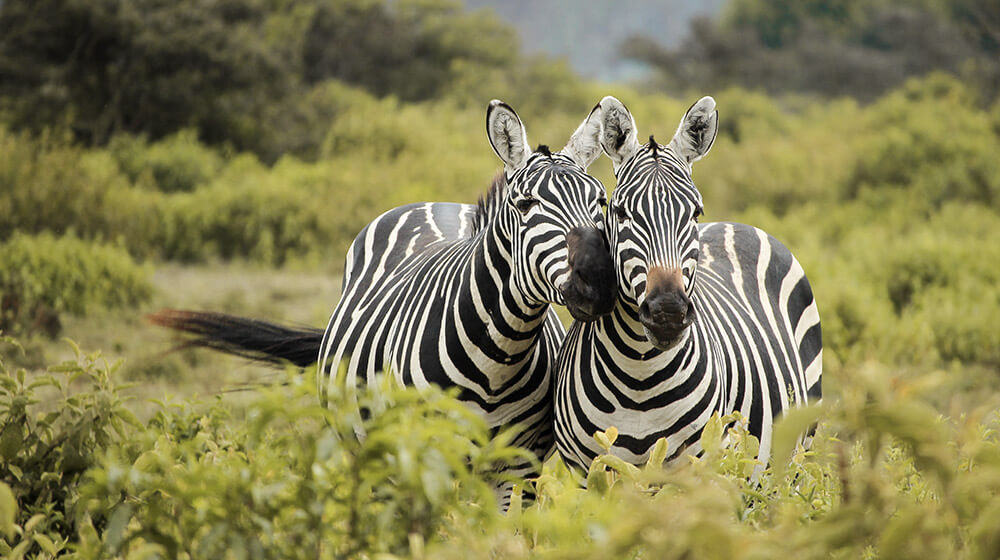 home_wildlife_photos5